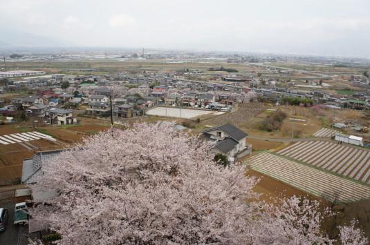 桜 歌舞伎文化公園 城の上