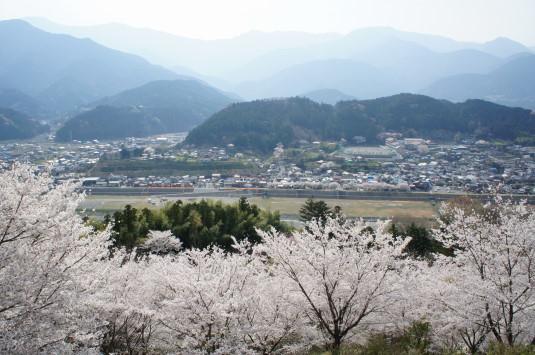 桜 うつぶな公園 南部町
