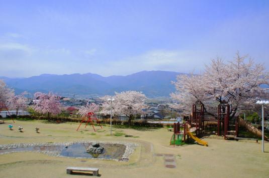 桜 歌舞伎文化公園 遠景