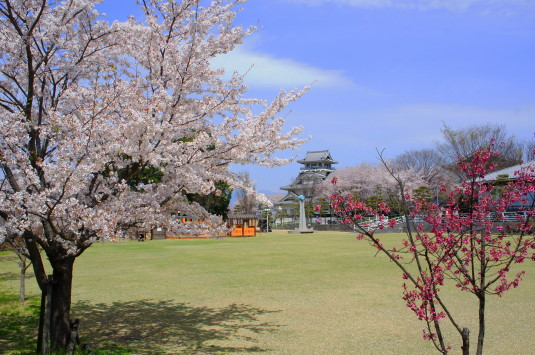 桜 歌舞伎文化公園 城と桜