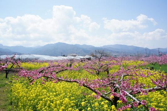 桃の花 グレープハウス 外観