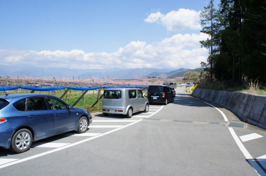 桃の花 埋草神社 駐車場