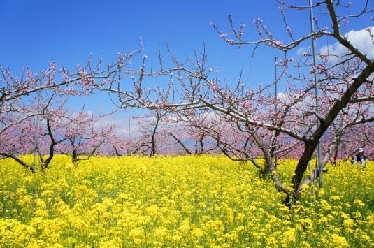 桃の花 埋草神社 外観
