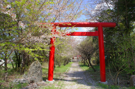 桃の花 埋草神社 神社入口