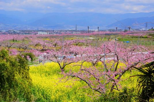 桃の花 埋草神社 眺め