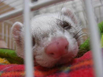 眠いよ・・・