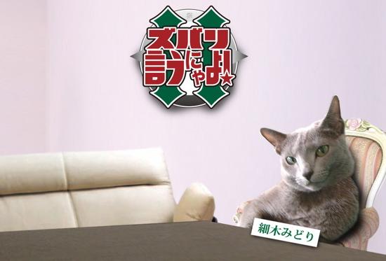 ズバリ猫1