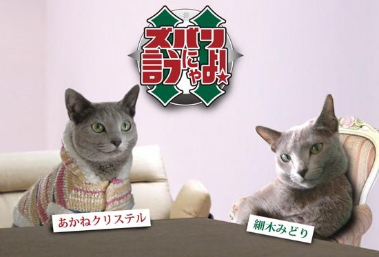 ズバリ猫2