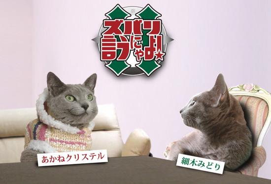 ズバリ猫3