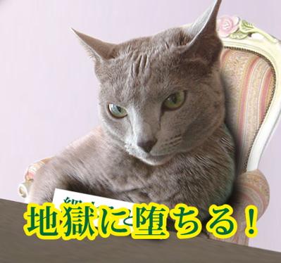 ズバリ猫4
