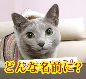 ズバリ猫5
