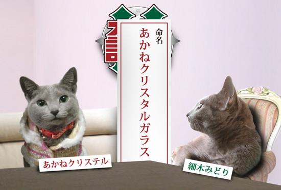 ズバリ猫6