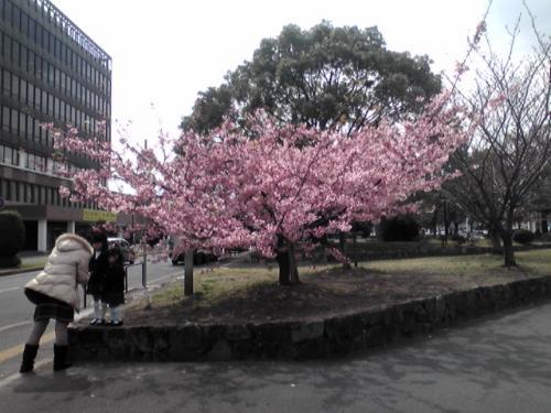 yaskusyo-hayazaki