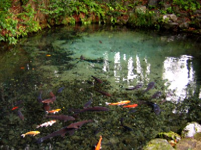 泉が森2005100406