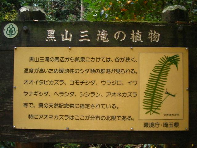 kuroyamasantaki110