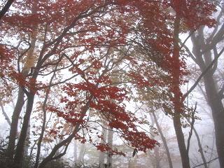 arima-kouyou235