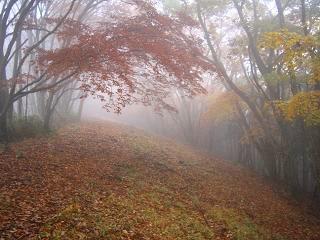 arima-kouyou238