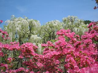 asikagaflower201