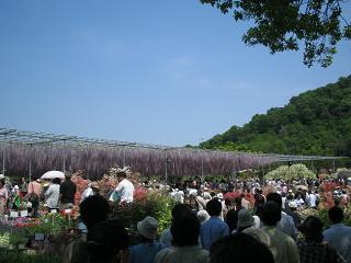 asikagaflower203