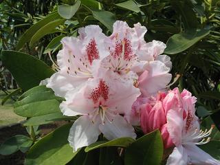 asikagaflower216