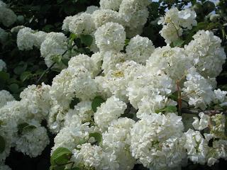asikagaflower222