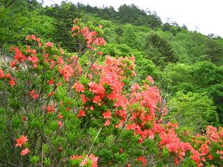 kentokuyama266