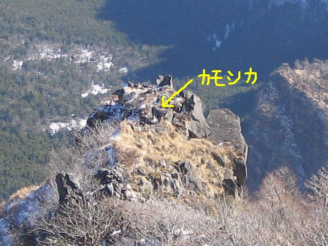 kurohuyama-kamosika101
