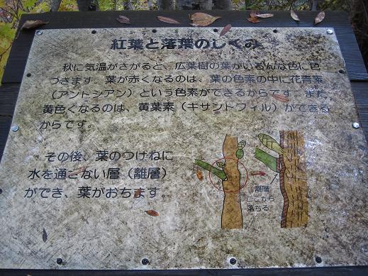 nasu-kouyou230