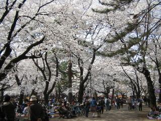 2006sakura-oomiya200
