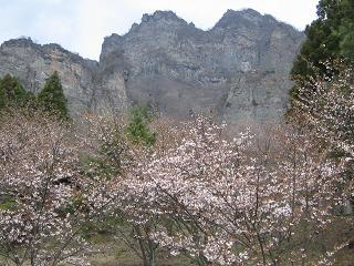 sakuranosato206