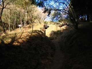 tanzawa231