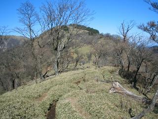 tanzawa269