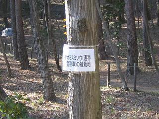 yukiwari206