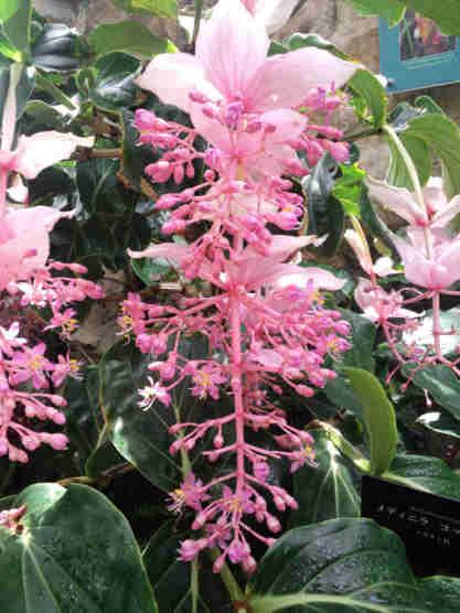 県立植物園110620a