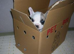 箱に入ってます