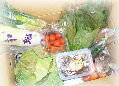 和郷園の野菜ボックス