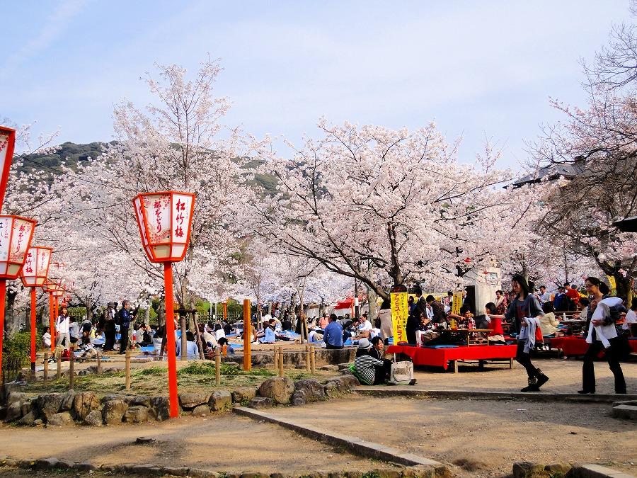 八坂桜00