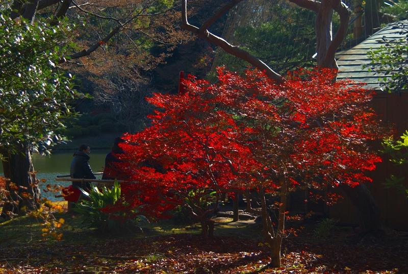 六義園紅葉と抹茶01