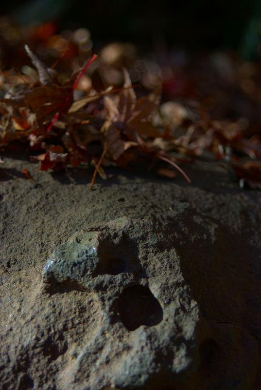 六義園落ち葉と石