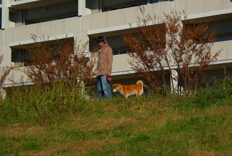 多摩川冬景色散策04