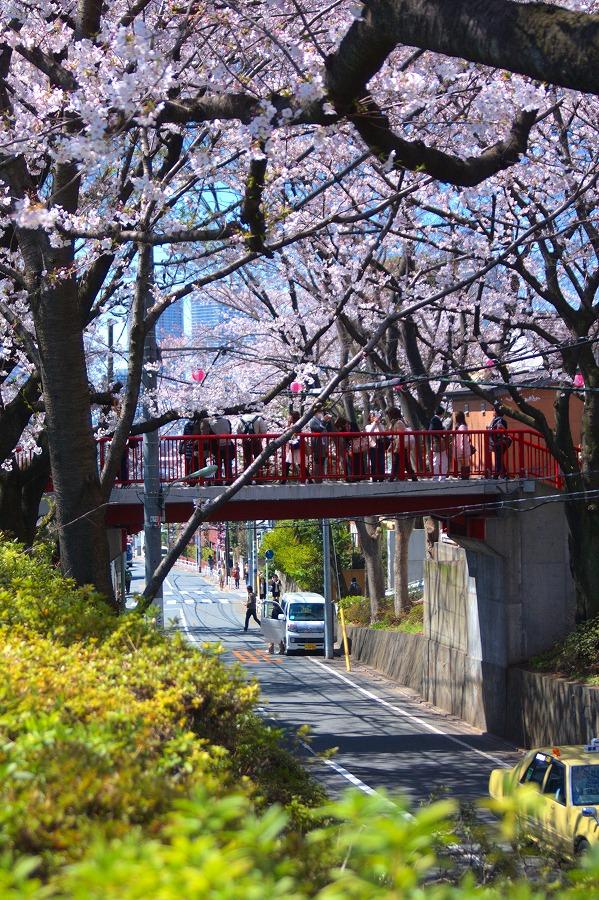 桜坂赤橋01