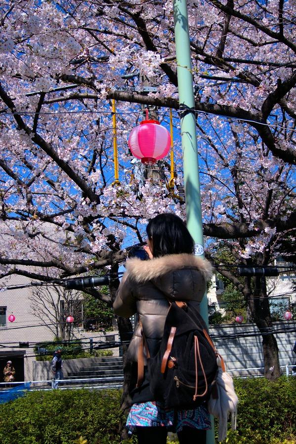 桜坂撮影する女性01