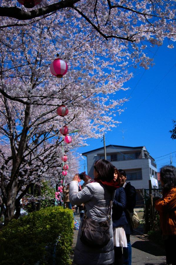 桜坂撮影する女性04