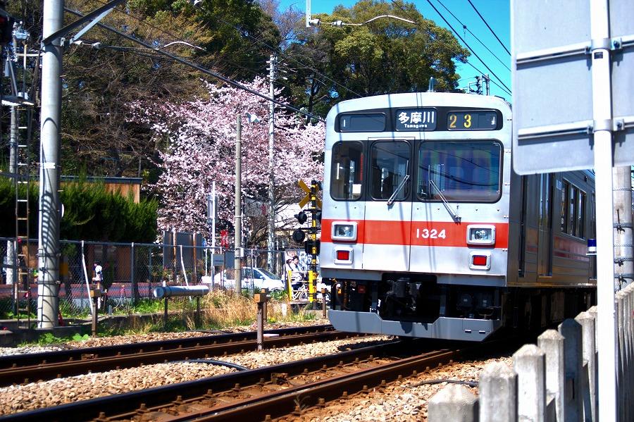サクラと東急多摩川線