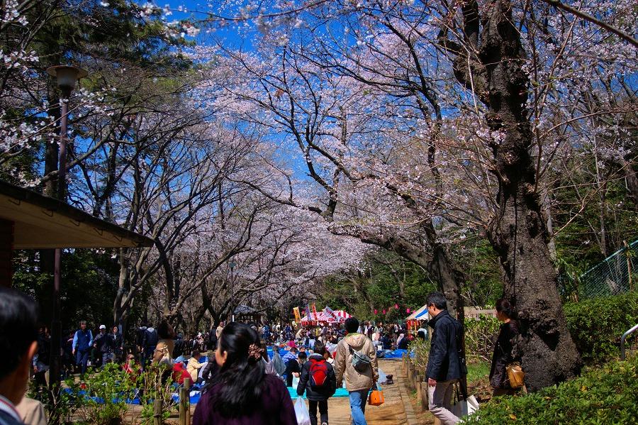 多摩川台桜04
