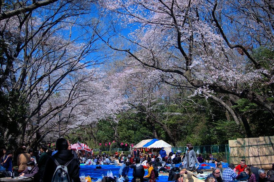 多摩川台桜06