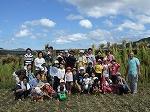稲刈り体験6