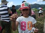 稲刈り体験4