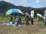 稲刈り体験5