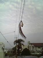 椰子の葉っぱ